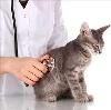 Ветеринарные клиники в Иваново